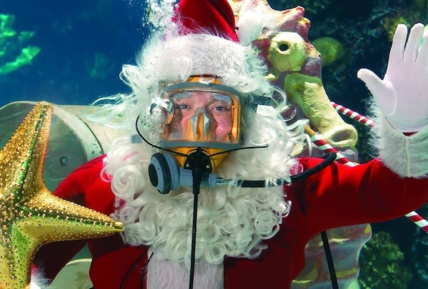 Scuba Santa is back at Newport Aquarium to frolic with the fish